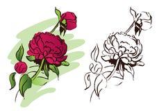 blommapion Arkivfoton