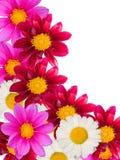 blommaprydnad Arkivfoton