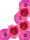 blommaprydnad Royaltyfria Bilder