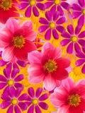 blommaprydnad Arkivbild