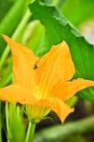 blommapumpa Royaltyfria Bilder