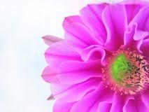blommapurple Royaltyfri Bild