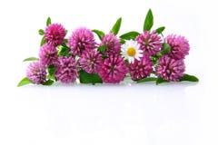 blommar ängen Royaltyfri Fotografi