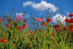 blommar ängen Royaltyfria Bilder