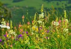 blommar ängen fotografering för bildbyråer