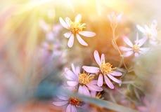 blommar ängen Arkivfoton