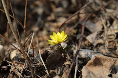 blommar is Royaltyfri Fotografi