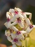 Blommar att blickar som rinnande folk arkivbild