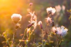 Blommar bakgrund Royaltyfri Foto