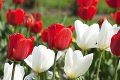 Blommar bakgrund Arkivfoton