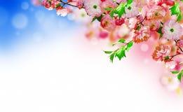 Blommar bakgrund med den fantastiska våren sakura royaltyfri illustrationer