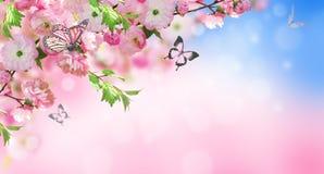 Blommar bakgrund med den fantastiska våren sakura vektor illustrationer