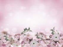 Blommar bakgrund med den fantastiska våren sakura stock illustrationer
