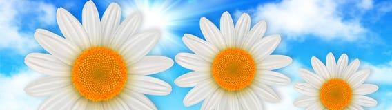 Blommar bakgrund, tusenskönablommor över blå himmel stock illustrationer