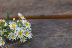 Blommar bakgrunder NATURLIG TUSENSKÖNAFRUNCH MOT BRUN TRÄBÄNK PÅ A PARKERAR fotografering för bildbyråer
