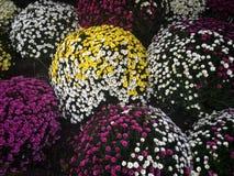 blommar begravning Fotografering för Bildbyråer