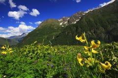 blommar berg Arkivfoto