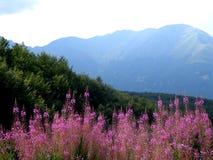 blommar berg Fotografering för Bildbyråer