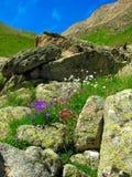 blommar berg royaltyfria foton
