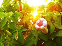 Blommar beuti Arkivbilder