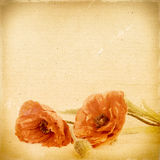 Blommar blom- bakgrund för tappning med vallmo på bakgrund Arkivfoton