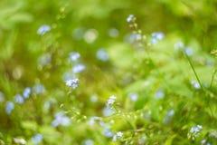 Blommar blom- gräsplan för abstrakt sommar bakgrund Arkivfoton