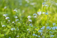 Blommar blom- grönt gräs för abstrakt sommar naturbakgrund Royaltyfri Bild