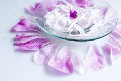 blommar brunnsorten Royaltyfri Bild