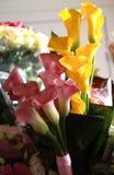 Blommar callaliljor arkivfoton