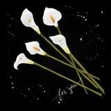 Blommar callaliljor på en svart bakgrund stock illustrationer