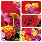 Blommar collage royaltyfria foton