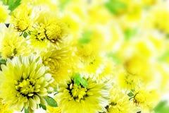 blommar dahlior Royaltyfri Foto