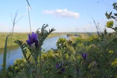 Blommar den bakgrundsDniester floden Arkivfoto