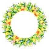 Blommar den blom- cirkelramen för vattenfärgen med vårguling vektor illustrationer