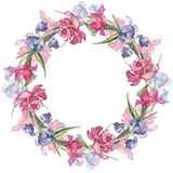 Blommar den färgrika handgjorda runda ramen för vattenfärgen med den rosa tulpan och irins arkivbild