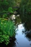 blommar den förlorade lagunen Fotografering för Bildbyråer