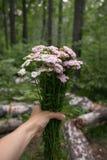 Blommar den hållande buketten för handen av skogen med handen på naturskogen, fritidlivsstil Eco organisk Hipsterstil advent royaltyfria foton