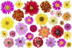 Blommar den isolerade stora uppsättningen Royaltyfria Bilder