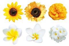 Blommar den isolerade stora uppsättningen Arkivbild