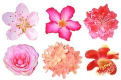 Blommar den isolerade stora uppsättningen Royaltyfria Foton