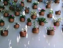 blommar den italy tuscany väggen royaltyfria bilder