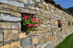 blommar den italy tuscany väggen Fotografering för Bildbyråer