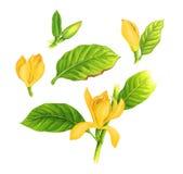 Blommar den konstnärliga naturen för champacaen Royaltyfri Illustrationer