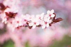 blommar den nya naturseriefjädern Royaltyfri Bild