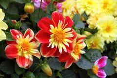 blommar den nya trädgården Fotografering för Bildbyråer