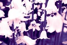 blommar den pastellfärgade fjädern fotografering för bildbyråer
