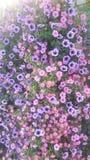 blommar den purpura wallpaperen arkivfoton