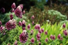 Blommar den purpurfärgade långa stammen arkivfoton