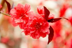 blommar den röda fjädern royaltyfri fotografi