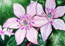 Blommar den rosa klematins för vattenfärgparpar naturen Royaltyfri Bild